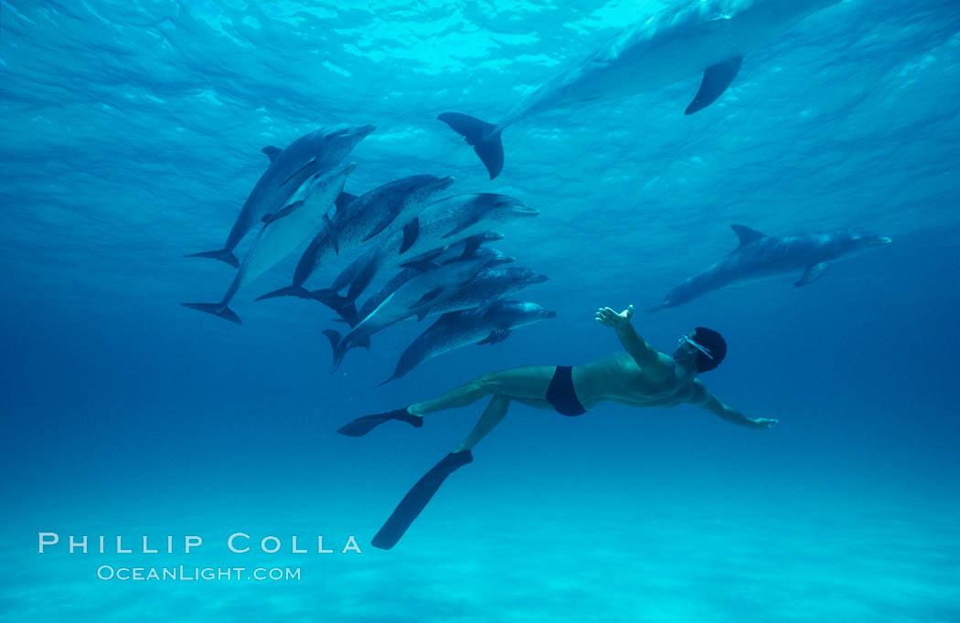 Atlantic spotted dolphin, Olympic swimmer Matt Biondi. Bahamas, Stenella frontalis, natural history stock photograph, photo id 00009