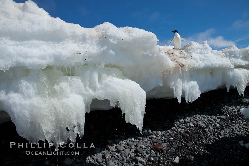 Melting ice along the shore of Paulet Island. Paulet Island, Antarctic Peninsula, Antarctica, natural history stock photograph, photo id 24831