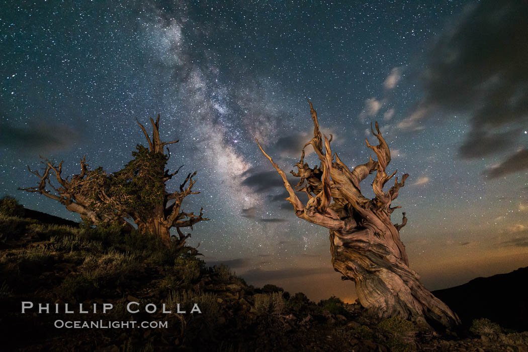 Image 29407, Stars and the Milky Way over ancient bristlecone pine trees, in the White Mountains at an elevation of 10,000' above sea level. These are some of the oldest trees in the world, some exceeding 4000 years in age. Ancient Bristlecone Pine Forest, White Mountains, Inyo National Forest, California, USA, Pinus longaeva, Phillip Colla, all rights reserved worldwide. Keywords: ancient, ancient bristlecone, ancient bristlecone pine forest, ancient bristlecone pine tree, astrophotography, bristlecone, bristlecone pine, bristlecone pine tree, california, dolomite, dusk, environment, evening, forest, galaxy, gnarled, great basin bristlecone pine, grove, growth, inyo national forest, landscape astrophotography, lifespan, longevity, milky way, milky way galaxy, mountain, national forests, nature, night, nightscape, old, old growth, outdoors, outside, pine, pine tree, pinus longaeva, plant, rock, soil, stars, summer, sunrise, terrestrial plant, time, tree, twisted, usa, western bristlecone pine, white mountains, white mountains inyo national forest.