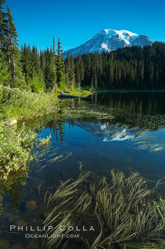 Mount Rainier is reflected in the calm waters of Reflection Lake, early morning. Mount Rainier National Park, Washington, USA, natural history stock photograph, photo id 13858