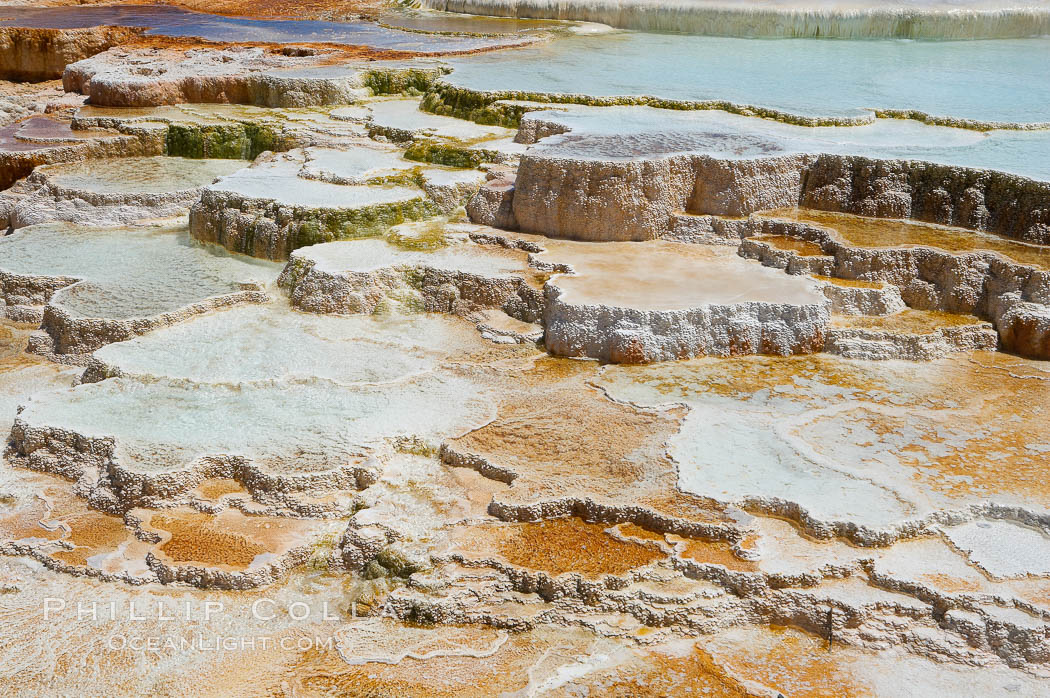 New Blue Spring and its travertine terraces, part of the Mammoth Hot Springs complex. Yellowstone National Park, Wyoming, USA, natural history stock photograph, photo id 13626