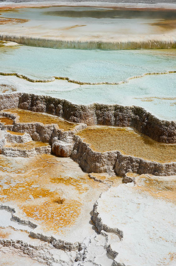 New Blue Spring and its travertine terraces, part of the Mammoth Hot Springs complex. Mammoth Hot Springs, Yellowstone National Park, Wyoming, USA, natural history stock photograph, photo id 13630