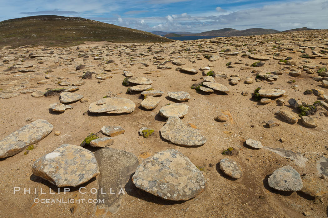Interesting rock formations on plateau atop New Island. Falkland Islands, United Kingdom, natural history stock photograph, photo id 23802