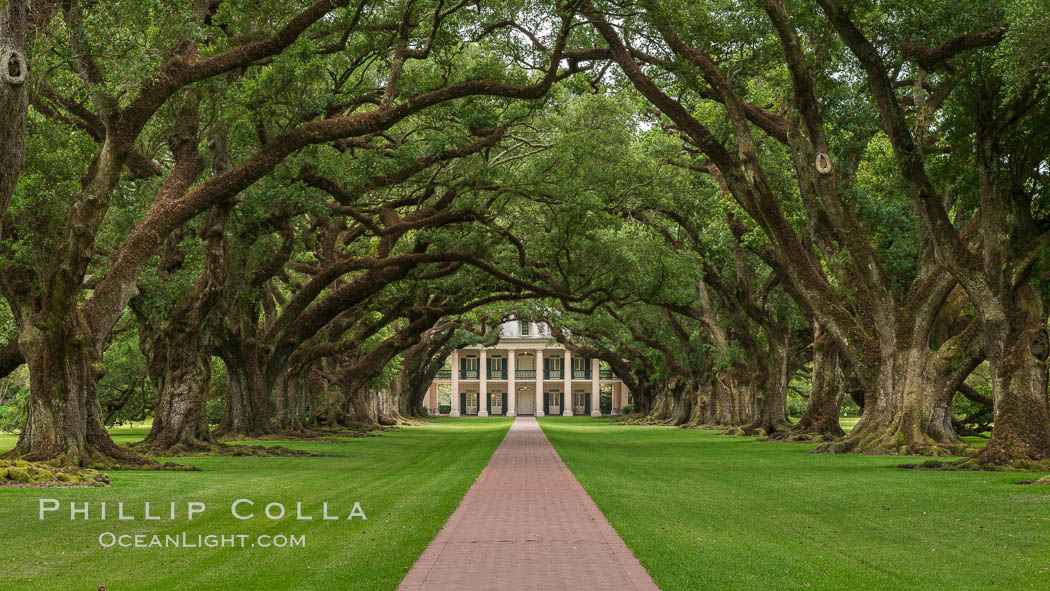 Oak Alley Plantation and its famous shaded tunnel of  300-year-old southern live oak trees (Quercus virginiana).  The plantation is now designated as a National Historic Landmark. Oak Alley Plantation, Vacherie, Louisiana, USA, natural history stock photograph, photo id 31002