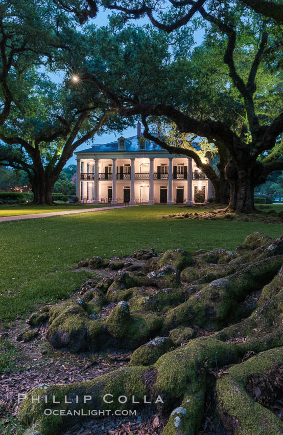 Oak Alley Plantation and its famous shaded tunnel of  300-year-old southern live oak trees (Quercus virginiana).  The plantation is now designated as a National Historic Landmark. Oak Alley Plantation, Vacherie, Louisiana, USA, natural history stock photograph, photo id 31010