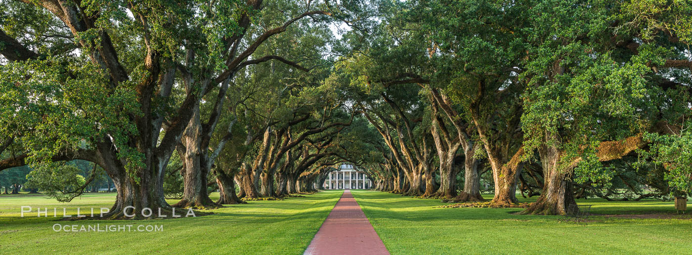 Oak Alley Plantation and its famous shaded tunnel of  300-year-old southern live oak trees (Quercus virginiana).  The plantation is now designated as a National Historic Landmark. Vacherie, Louisiana, USA, natural history stock photograph, photo id 31018
