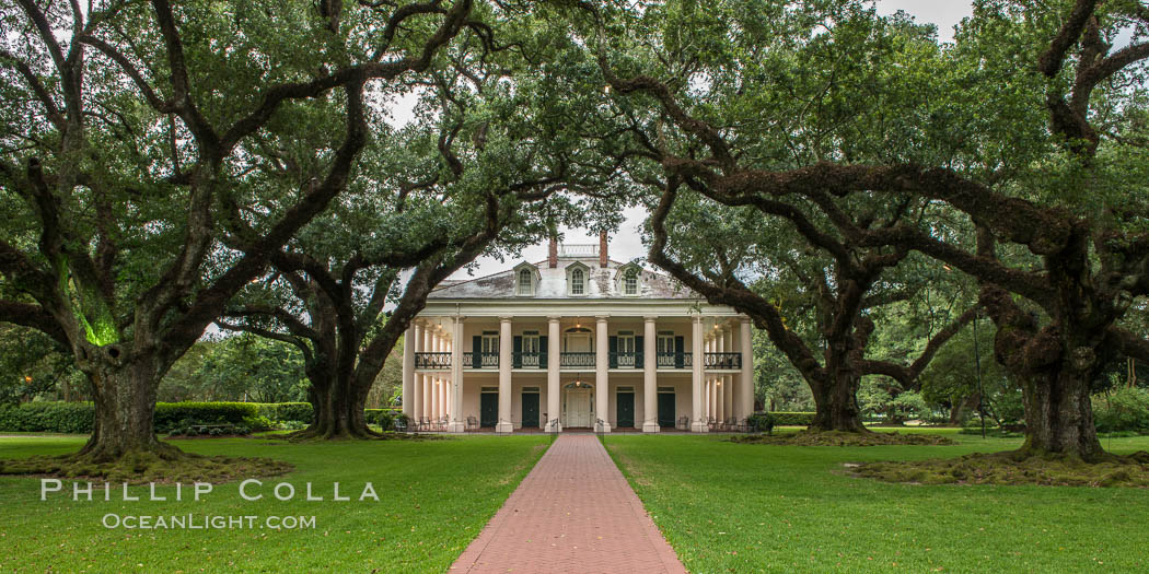 Oak Alley Plantation and its famous shaded tunnel of  300-year-old southern live oak trees (Quercus virginiana).  The plantation is now designated as a National Historic Landmark. Vacherie, Louisiana, USA, natural history stock photograph, photo id 31004