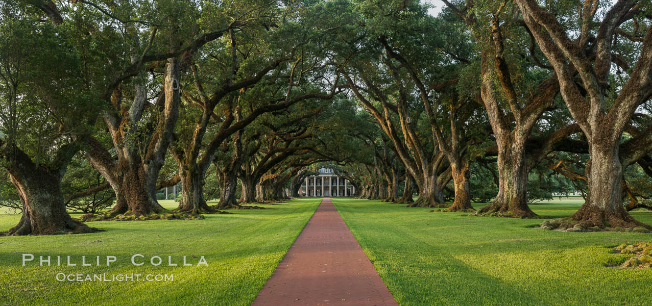 Oak Alley Plantation and its famous shaded tunnel of  300-year-old southern live oak trees (Quercus virginiana).  The plantation is now designated as a National Historic Landmark. Oak Alley Plantation, Vacherie, Louisiana, USA, natural history stock photograph, photo id 31015
