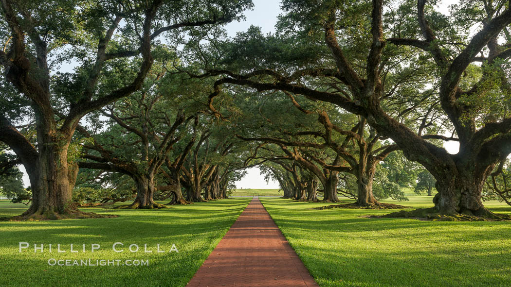 A Tunnel Of Old Southern Oak Trees Stretches Off Toward The Mississippi River Alley