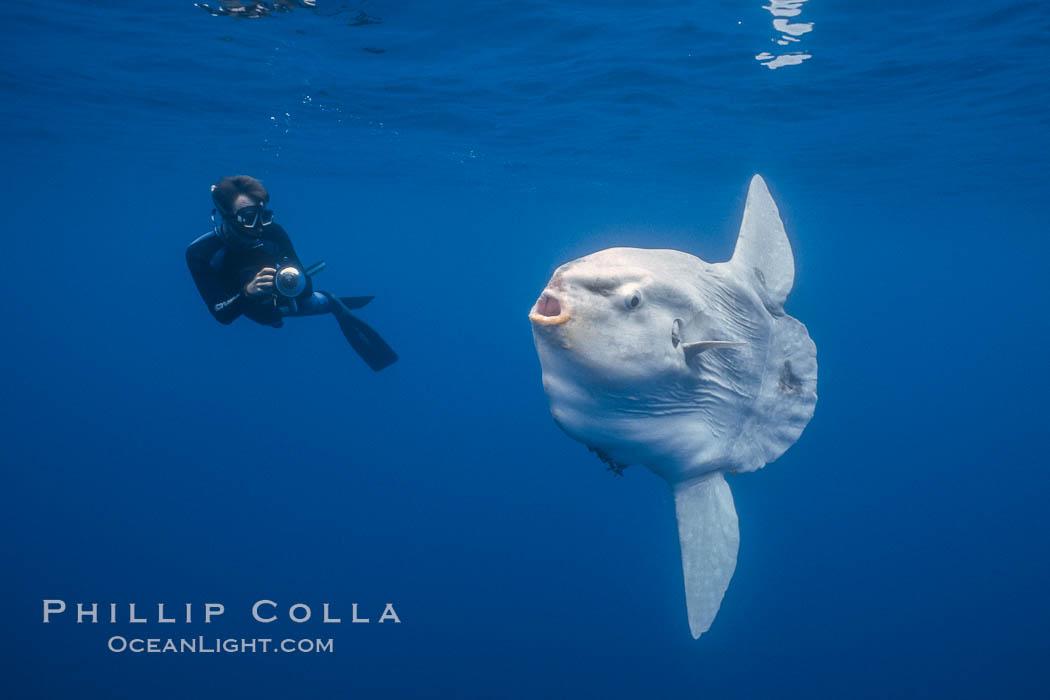 Ocean sunfish and photographer, open ocean, Mola mola, San Diego, California