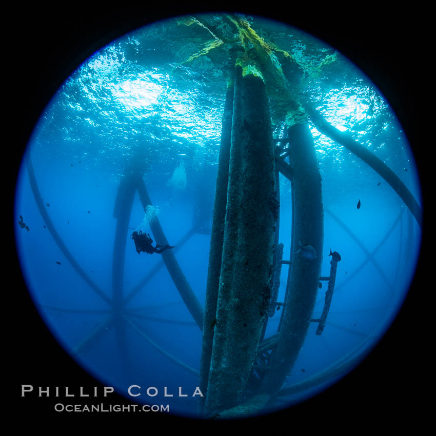 Oil Rig Ellen and Elly, Underwater Structure. Long Beach, California, USA, natural history stock photograph, photo id 34665