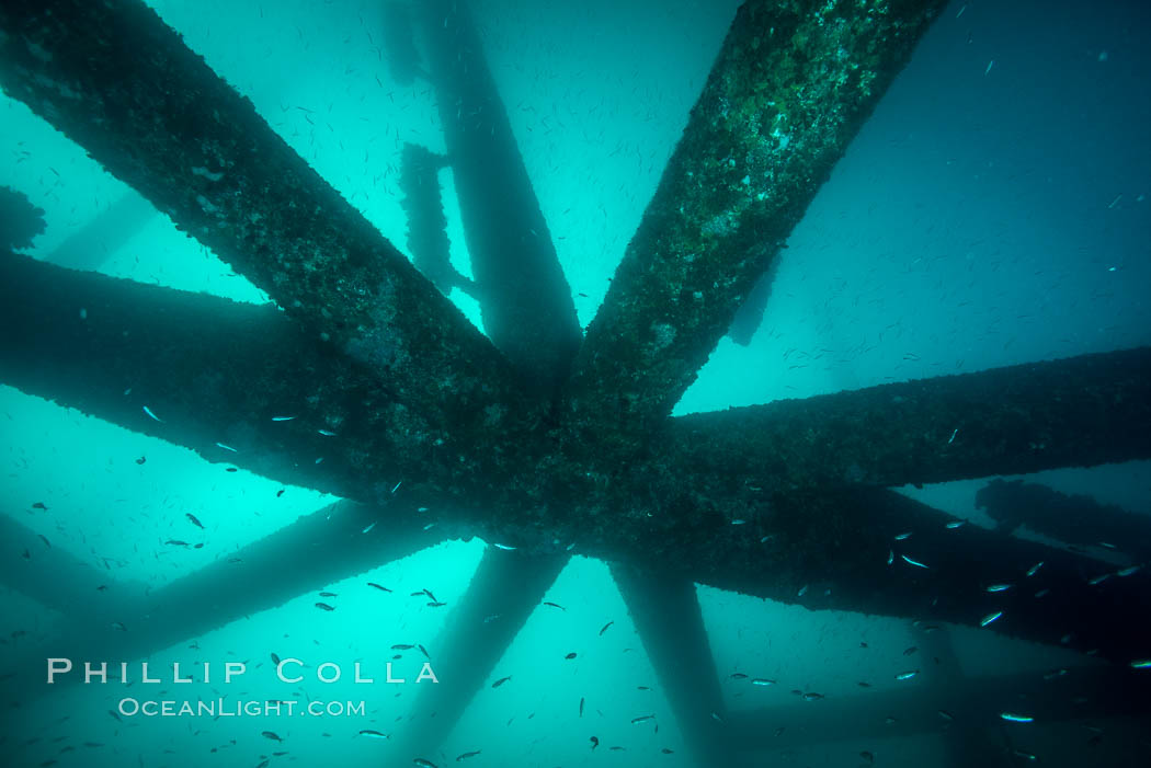 Oil Rig Eureka, Underwater Structure. Long Beach, California, USA, natural history stock photograph, photo id 31082