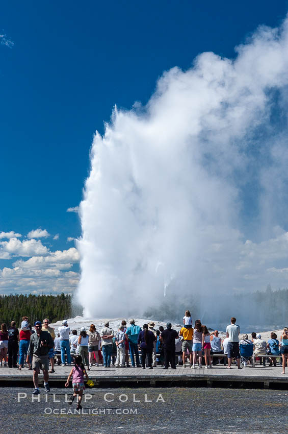 A crowd gathers to watch the worlds most famous geyser, Old Faithful, in Yellowstone National Park. Upper Geyser Basin, Wyoming, USA, natural history stock photograph, photo id 07196