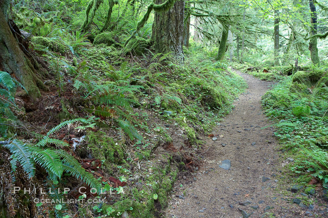 Hiking trails through a temperature rainforest in the lush green Columbia River Gorge. Columbia River Gorge National Scenic Area, Oregon, USA, natural history stock photograph, photo id 19361