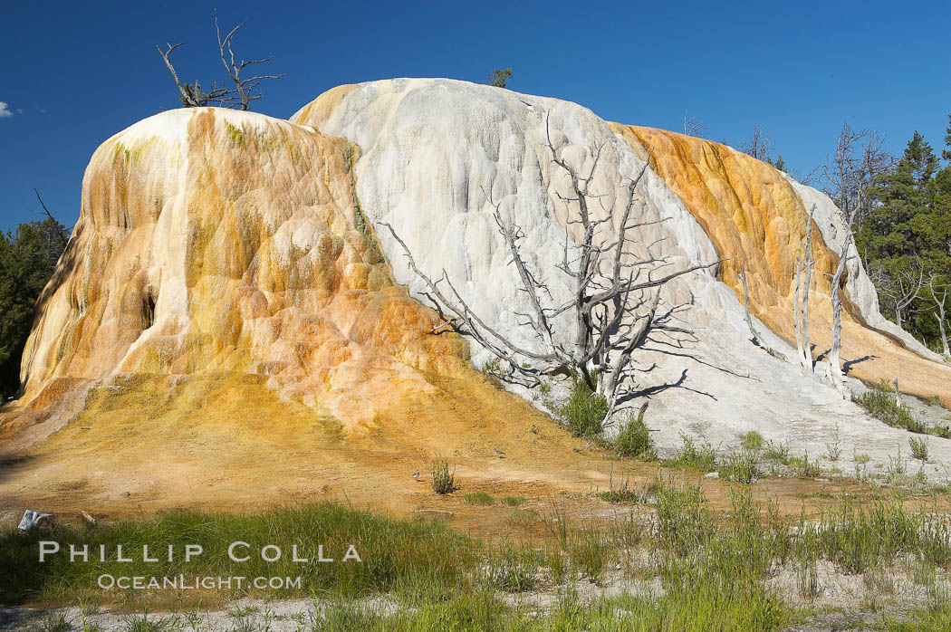Orange Spring Mound.  Many years of mineral deposition has built up Orange Spring Mound, part of the Mammoth Hot Springs complex. Mammoth Hot Springs, Yellowstone National Park, Wyoming, USA, natural history stock photograph, photo id 13613