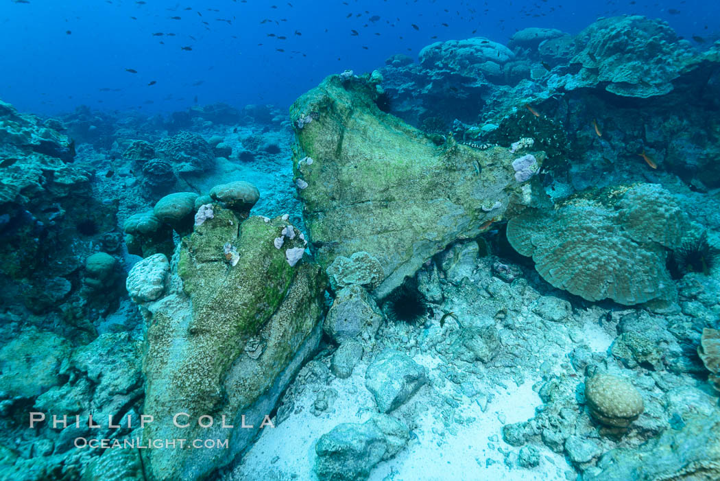 Enormous Porites lobata coral head, overturned by storm surge, Clipperton Island. Clipperton Island, France, Porites lobata, natural history stock photograph, photo id 33064