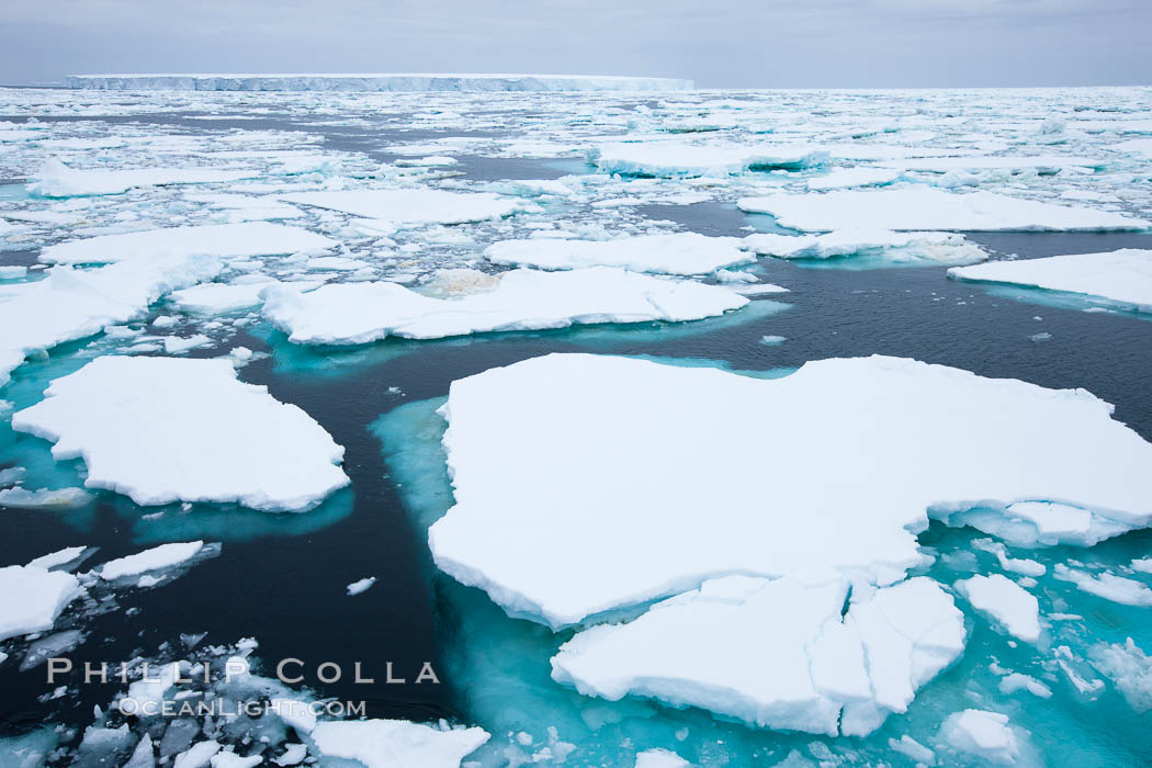 Pack ice and brash ice fills the Weddell Sea, near the Antarctic Peninsula.  This pack ice is a combination of broken pieces of icebergs, sea ice that has formed on the ocean. Weddell Sea, Southern Ocean, natural history stock photograph, photo id 24792