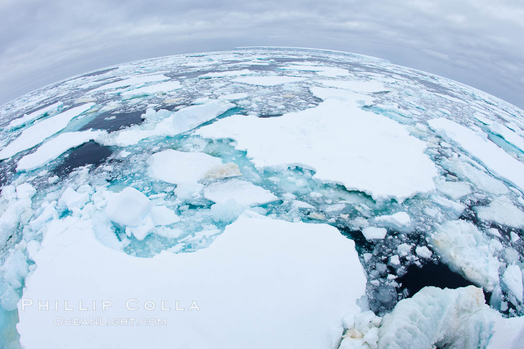 Pack ice and brash ice fills the Weddell Sea, near the Antarctic Peninsula.  This pack ice is a combination of broken pieces of icebergs, sea ice that has formed on the ocean. Southern Ocean, natural history stock photograph, photo id 24791