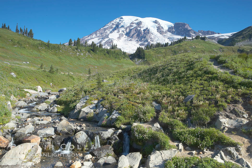 Mount Rainier rises above Edith Creek. Paradise Meadows, Mount Rainier National Park, Washington, USA, natural history stock photograph, photo id 13881