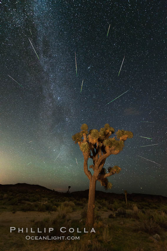Perseid Meteor Shower over Joshua Tree National Park, Aug 13, 2014. Joshua Tree National Park, California, USA, natural history stock photograph, photo id 31145