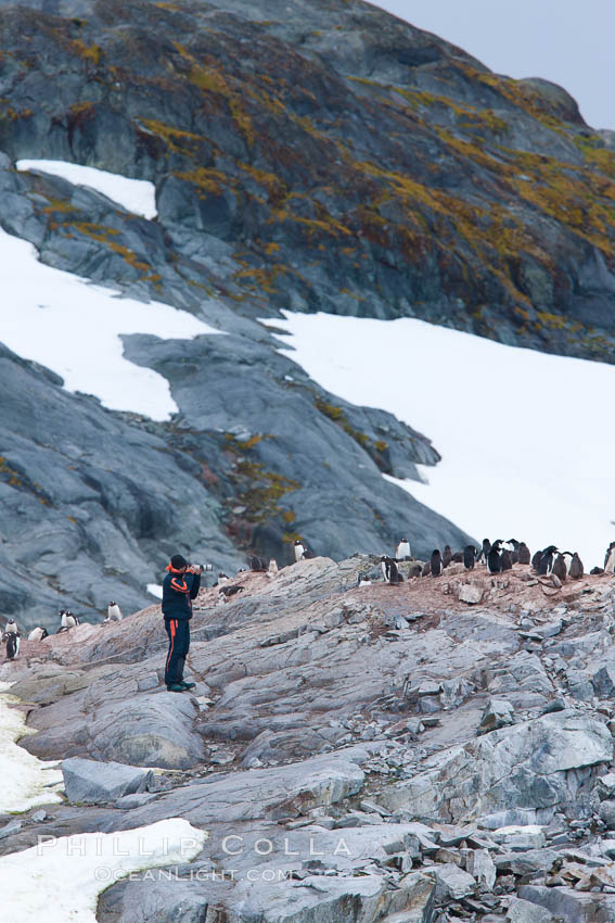 Photographer and gentoo penguins, Peterman Island. Peterman Island, Antarctic Peninsula, Antarctica, natural history stock photograph, photo id 25625