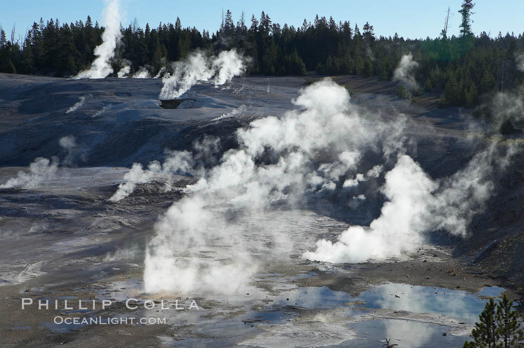 Steam rises in the Porcelain Basin. Norris Geyser Basin, Yellowstone National Park, Wyoming, USA, natural history stock photograph, photo id 13488