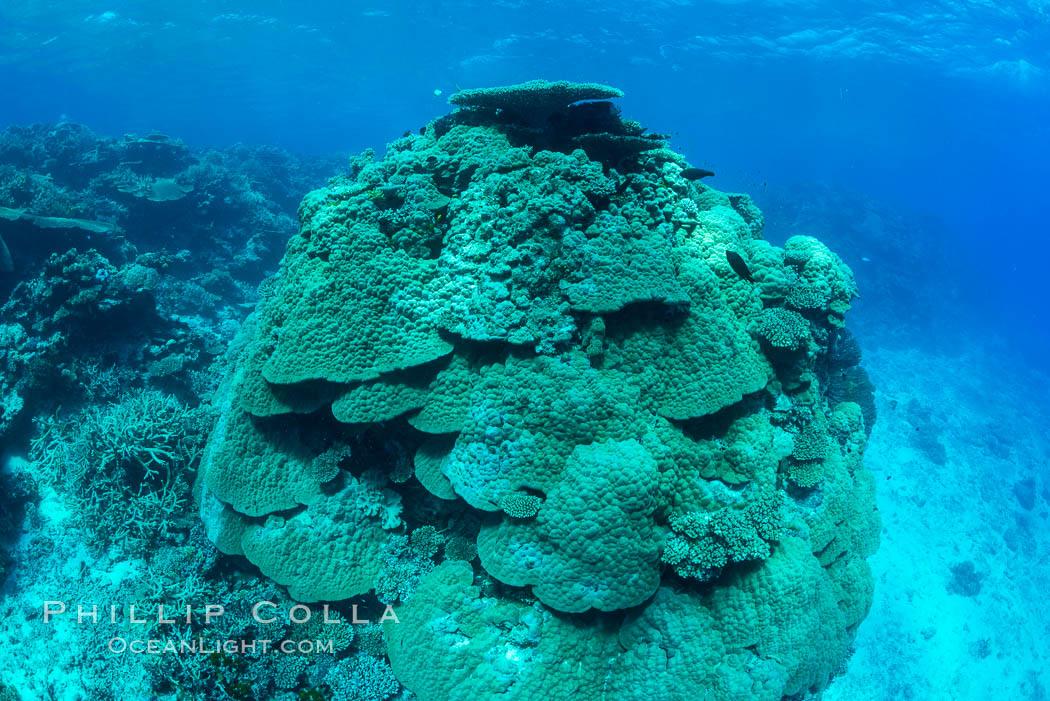 Enormous pristine 1000-year-old Porites coral head, boulder coral, Fiji. Wakaya Island, Lomaiviti Archipelago, Fiji, natural history stock photograph, photo id 31758