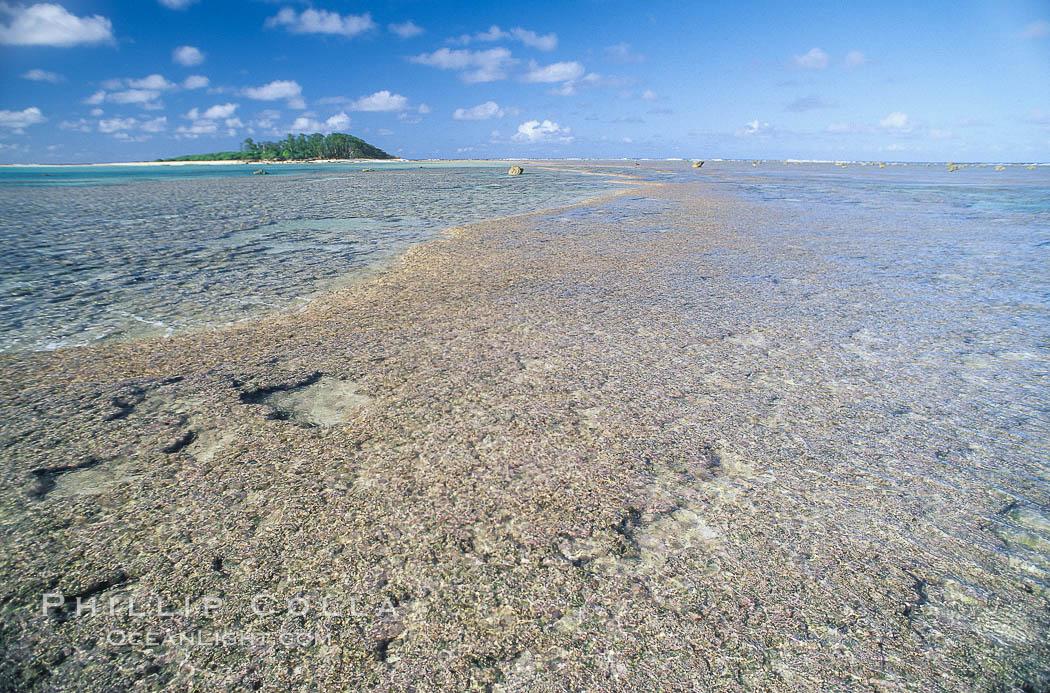 coralline algae reef. Rose Atoll National Wildlife Sanctuary, American Samoa, USA, Porolithon, natural history stock photograph, photo id 00727