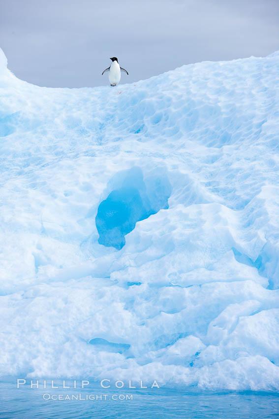 A tiny Adelie penguins stands atop an iceberg. Paulet Island, Antarctic Peninsula, Antarctica, Pygoscelis adeliae, natural history stock photograph, photo id 24830
