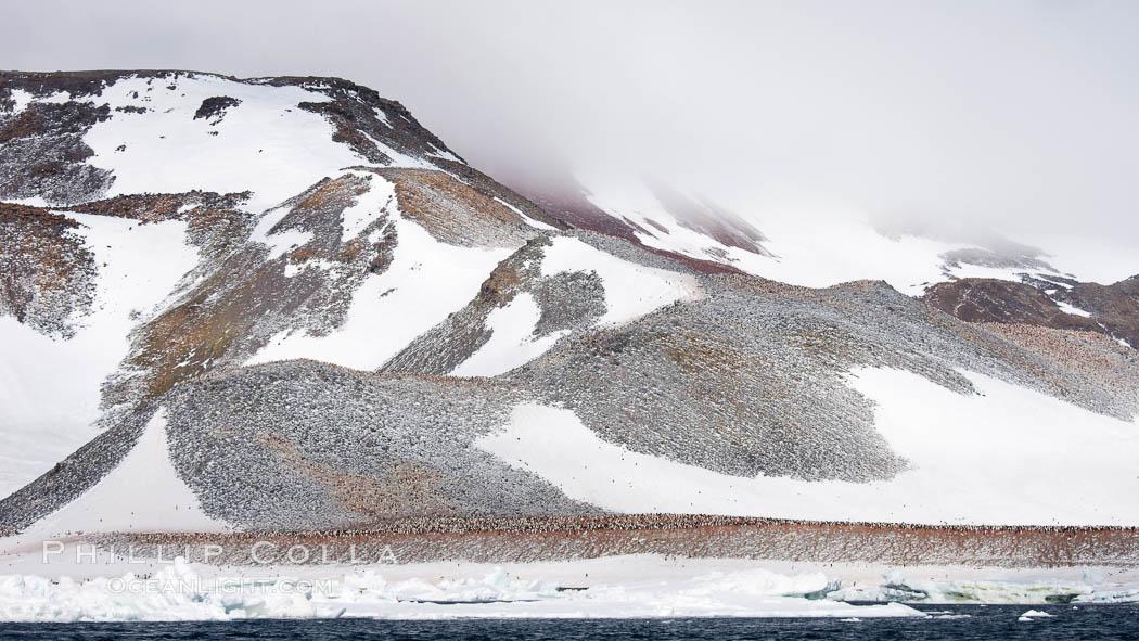 Enormous colony of Adelie penguins covers the hillsides of Paulet Island. Paulet Island, Antarctic Peninsula, Antarctica, Pygoscelis adeliae, natural history stock photograph, photo id 24836