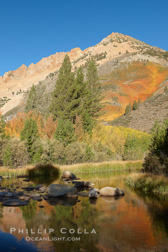 Paiute Peak, covered with changing aspen trees in autumn, rises above the calm reflecting waters of North Lake. Bishop Creek Canyon, Sierra Nevada Mountains, California, USA, Populus tremuloides, natural history stock photograph, photo id 23367