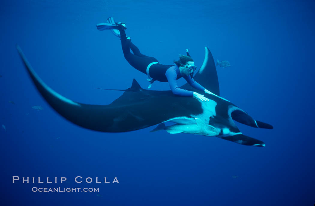 Manta ray and freediver. San Benedicto Island (Islas Revillagigedos), Baja California, Mexico, Manta birostris, natural history stock photograph, photo id 02462