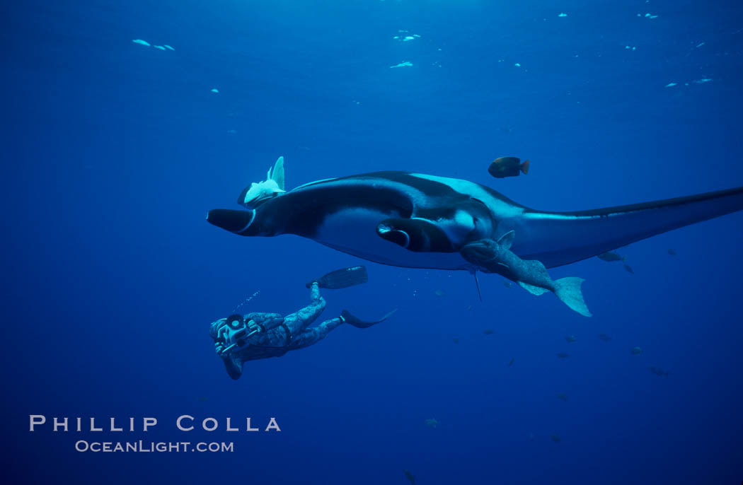 Manta ray and freediving videographer. San Benedicto Island (Islas Revillagigedos), Baja California, Mexico, Manta birostris, natural history stock photograph, photo id 02463