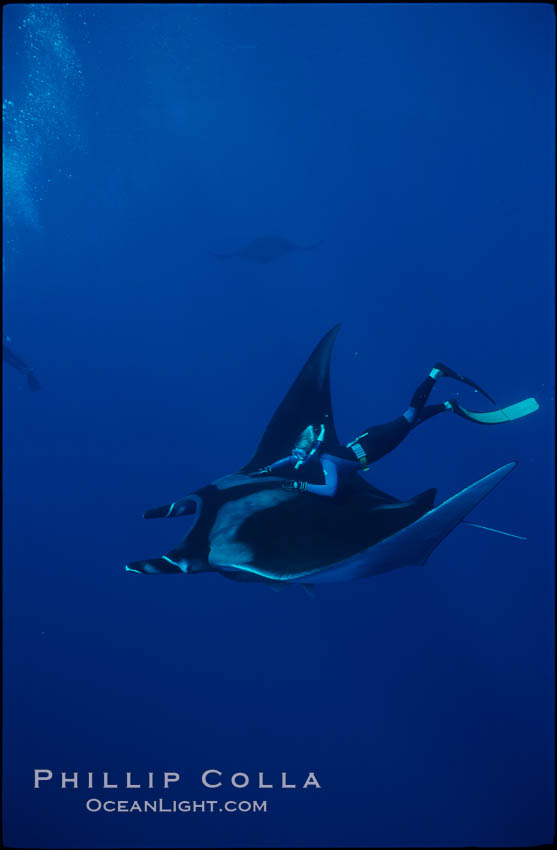 Manta ray and freediver. San Benedicto Island (Islas Revillagigedos), Baja California, Mexico, Manta birostris, natural history stock photograph, photo id 02457