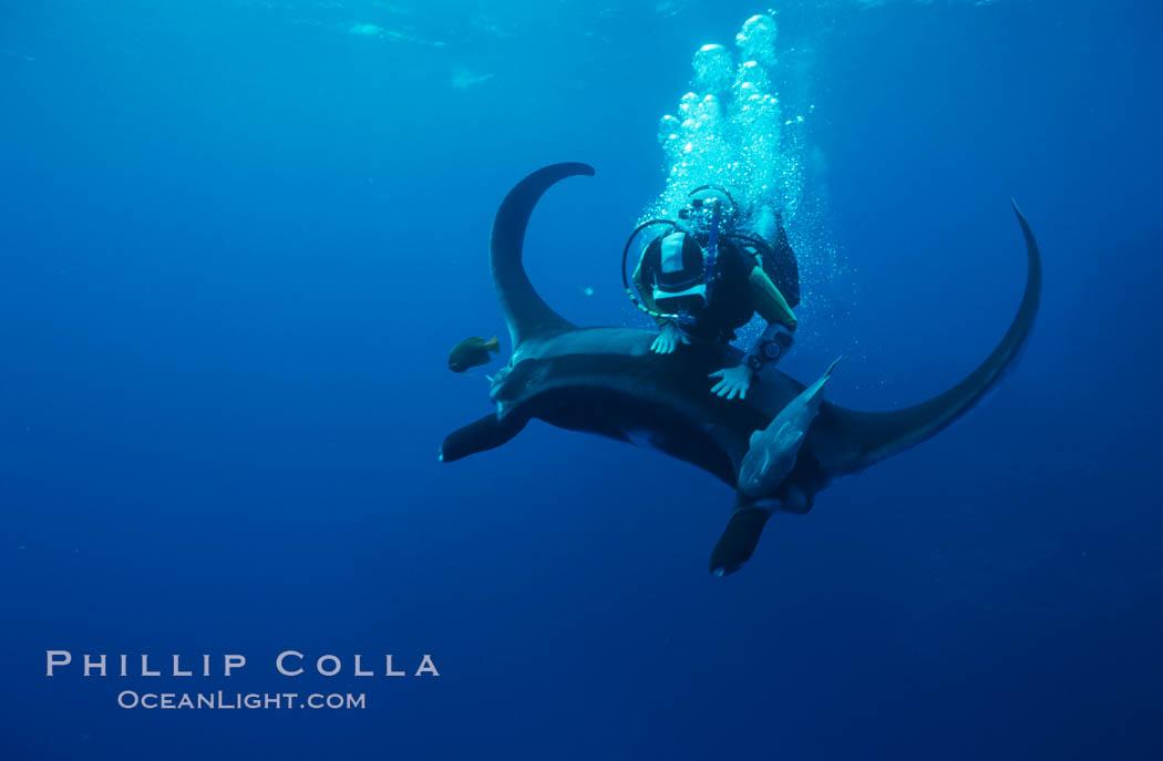 Manta ray and scuba diver. San Benedicto Island (Islas Revillagigedos), Baja California, Mexico, Manta birostris, natural history stock photograph, photo id 02469