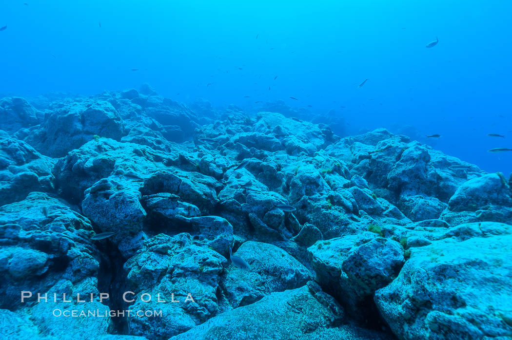 Granite structures form the underwater reef at Abalone Point. Guadalupe Island (Isla Guadalupe), Baja California, Mexico, natural history stock photograph, photo id 09544