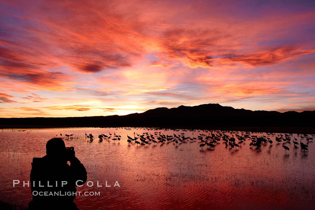 A photographer composes his perfect image of another beautiful sunset at Bosque del Apache National Wildlife Refuge. Bosque del Apache National Wildlife Refuge, Socorro, New Mexico, USA, Grus canadensis, natural history stock photograph, photo id 22058