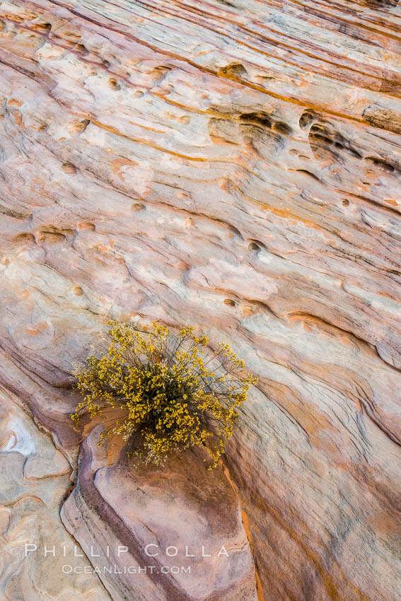 Sandstone details, red rocks, Valley of Fire. Valley of Fire State Park, Nevada, USA, natural history stock photograph, photo id 28447