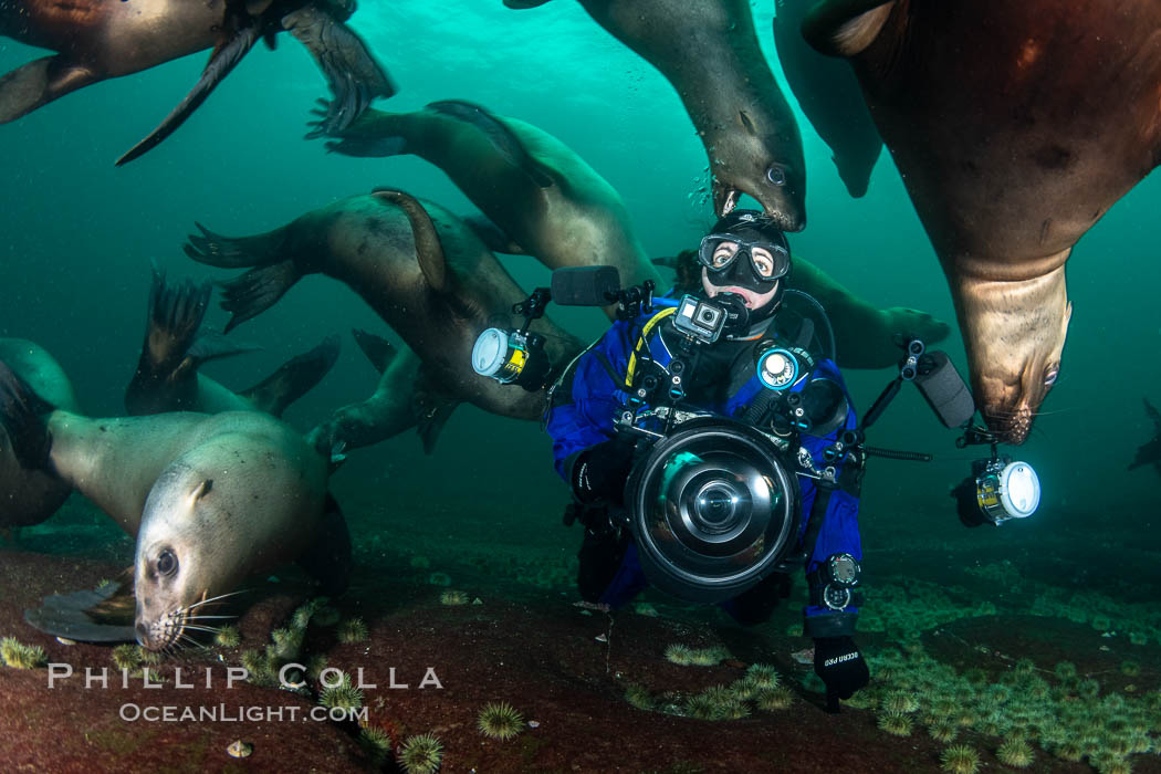 SCUBA Diver and Steller Sea Lions Underwater,  underwater photographer, Hornby Island, British Columbia, Canada. Norris Rocks, Eumetopias jubatus, natural history stock photograph, photo id 36120