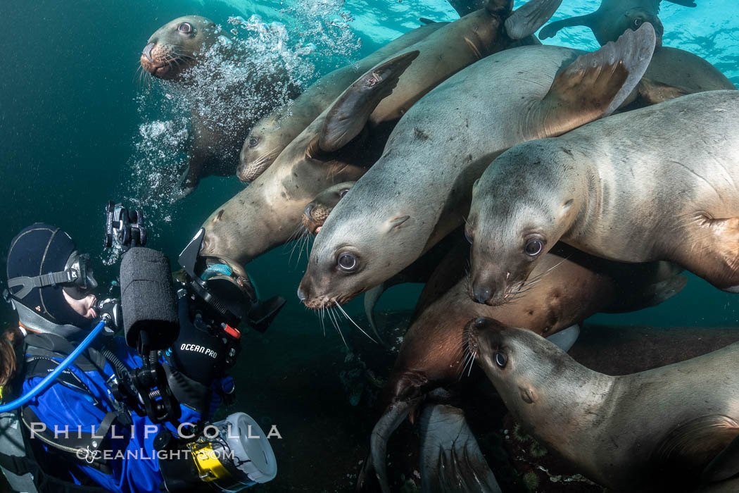 SCUBA Diver and Steller Sea Lions Underwater,  underwater photographer, Hornby Island, British Columbia, Canada. Norris Rocks, Eumetopias jubatus, natural history stock photograph, photo id 36128