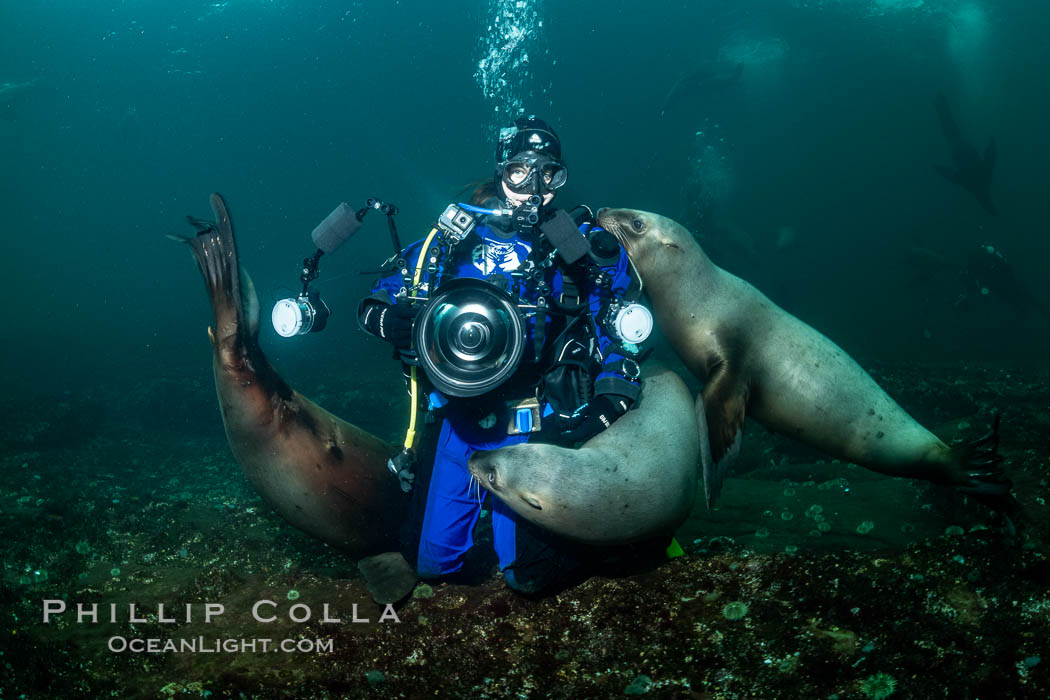 SCUBA Diver and Steller Sea Lions Underwater,  underwater photographer, Hornby Island, British Columbia, Canada. Norris Rocks, Eumetopias jubatus, natural history stock photograph, photo id 36132