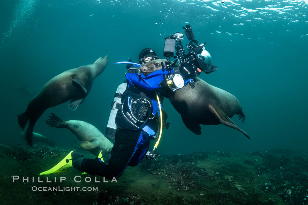 SCUBA Diver and Steller Sea Lions Underwater,  underwater photographer, Hornby Island, British Columbia, Canada. Norris Rocks, Eumetopias jubatus, natural history stock photograph, photo id 36123