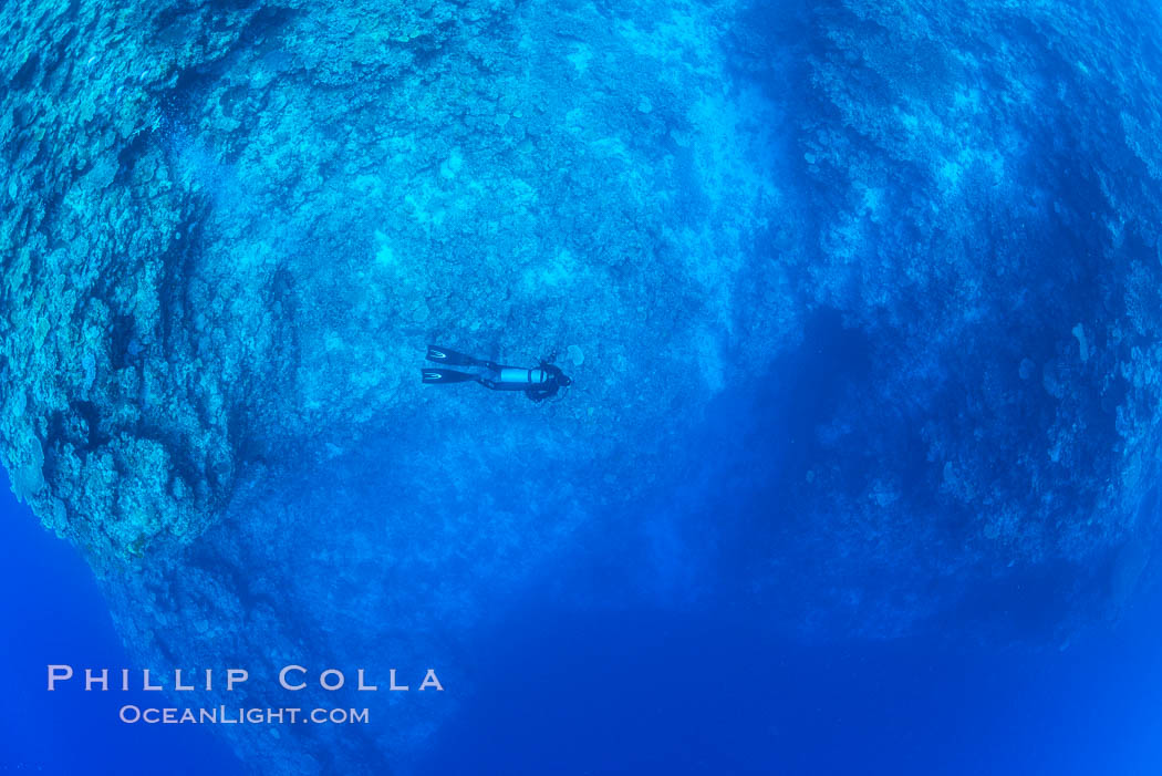 SCUBA diver over pristine South Pacific coral reef, Fiji. Wakaya Island, Lomaiviti Archipelago, natural history stock photograph, photo id 31550