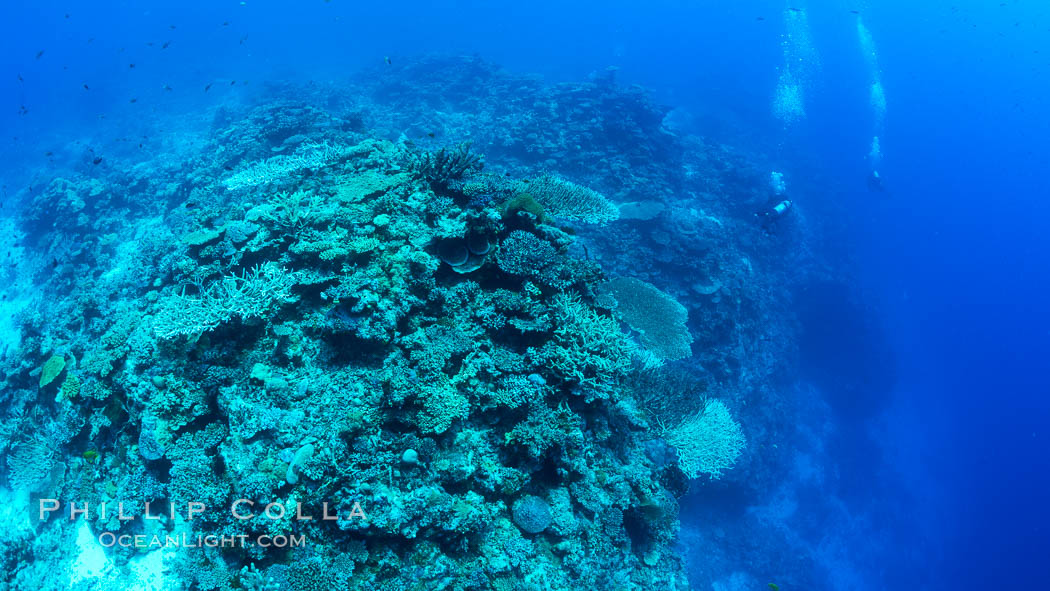 SCUBA diver over pristine South Pacific coral reef, Fiji. Wakaya Island, Lomaiviti Archipelago, natural history stock photograph, photo id 31757