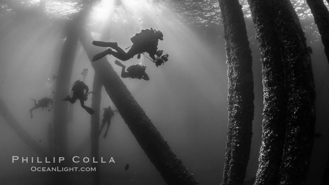 SCUBA Divers explore an oil platform. Long Beach, California, USA, natural history stock photograph, photo id 34255
