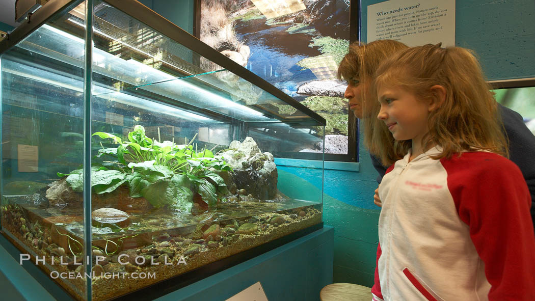 """Visitors view a display of amphibians at the """"Water"""" exhibit, San Diego Natural History Museum. Balboa Park, San Diego, California, USA, natural history stock photograph, photo id 22180"""