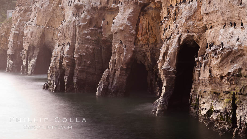 Sea Caves, the famous La Jolla sea caves lie below tall cliffs at Goldfish Point.  Sunrise. California, USA, natural history stock photograph, photo id 26442