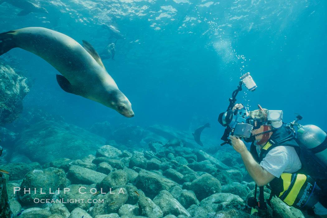 Image 01980, California sea lion and diver, Sea of Cortez., Zalophus californianus