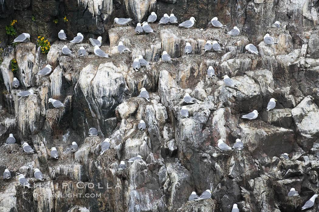 Seabirds nest on coastal rocks. Kenai Fjords National Park, Alaska, USA, natural history stock photograph, photo id 17378