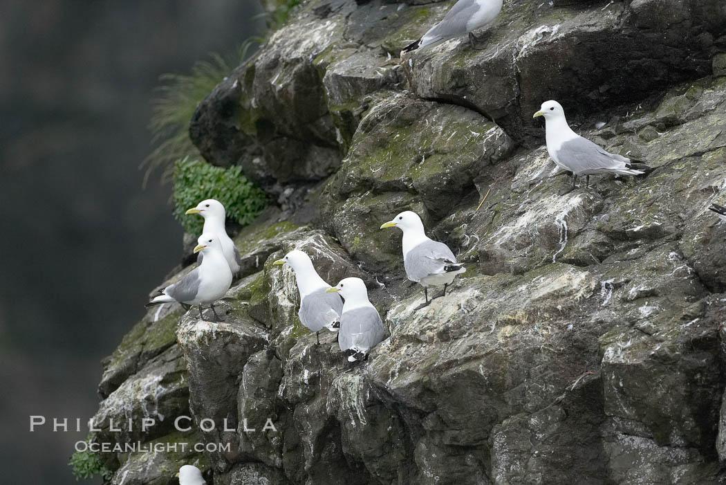 Seabirds nest on coastal rocks. Kenai Fjords National Park, Alaska, USA, natural history stock photograph, photo id 17383